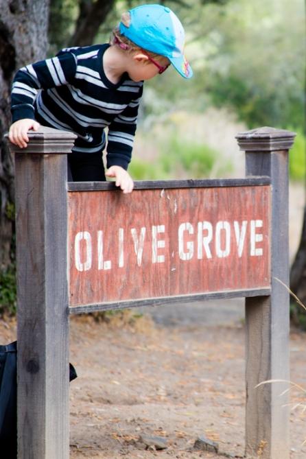olivef-olivegrove