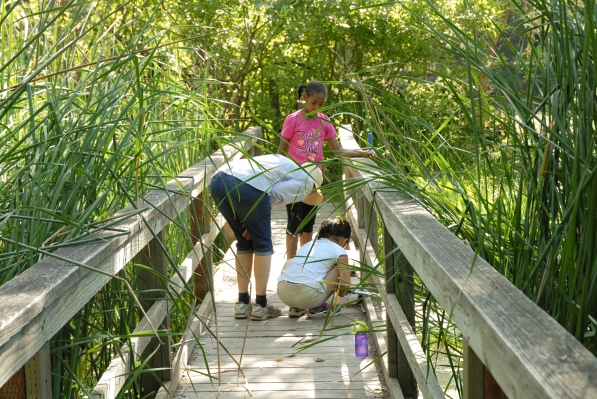 Students examine pond water with retired OUSD Teacher and Wagner Ranch Volunteer, Mary Welte.
