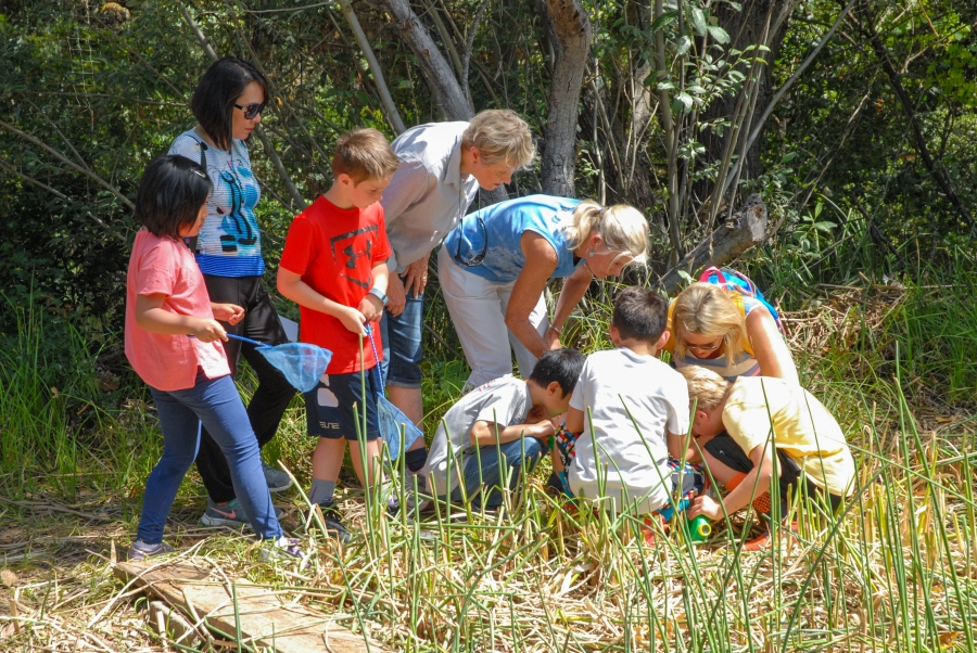 Students examine pond water for tadpoles, larvae and other critters.